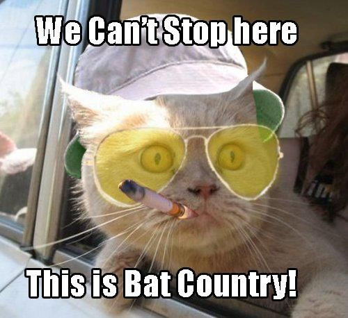 Hhehhheh Fear Loathing Funny Meme Pictures Cat Memes