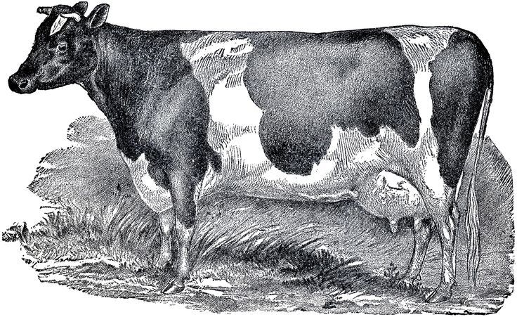 What Makes A Home Country Clip Art Vintage Vintage Drawing Cow Illustration