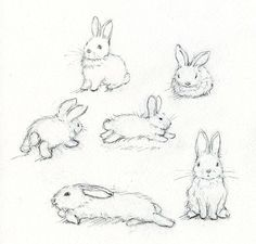 how to draw rabbits realistic recherche google