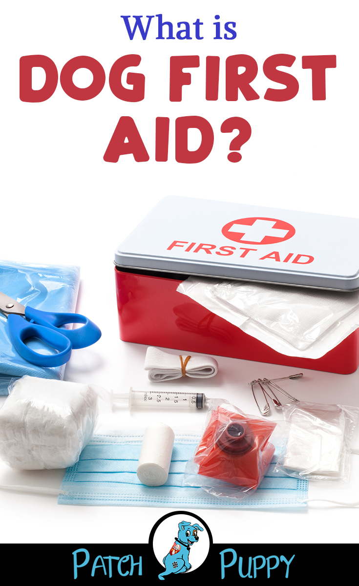 How to Put Together a 17 Essential Item DIY Dog First Aid