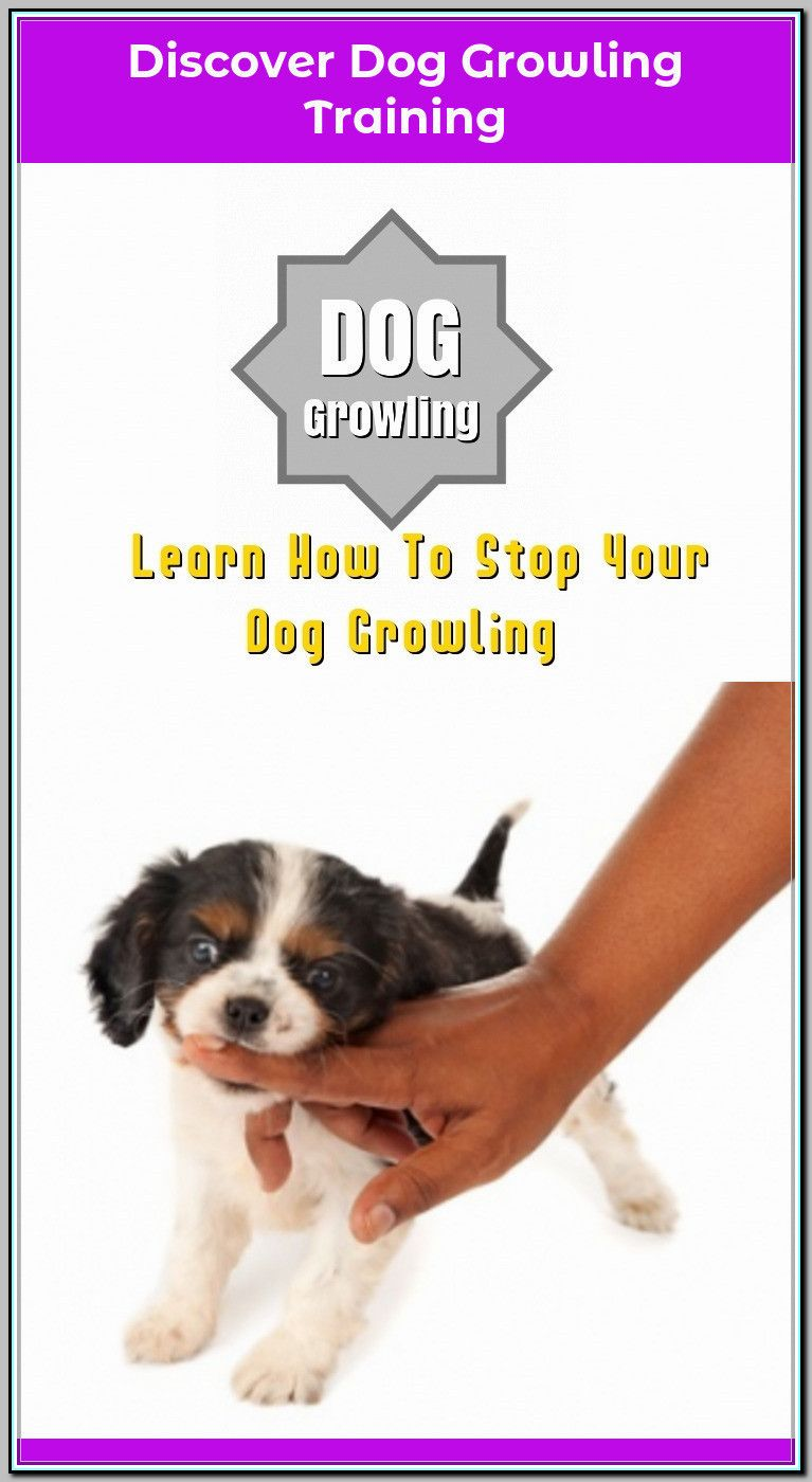 Ways Of Stopping Your Dog From Growling Dog Growling Dog