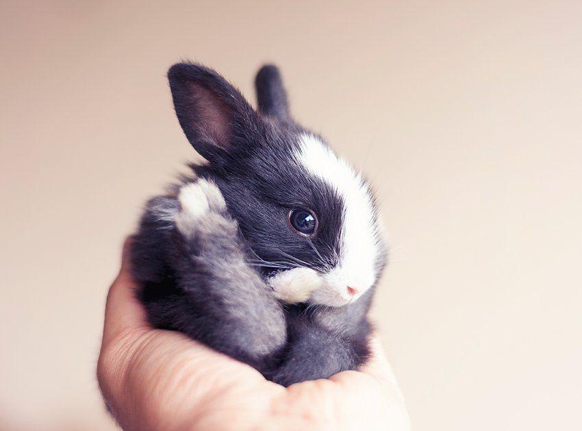 Susse Kaninchen Babys Die Ohren Wachsen Zum Schluss Fotos Der Spiegel Wissenschaft Susse Tiere Susse Baby Tiere Baby Kaninchen