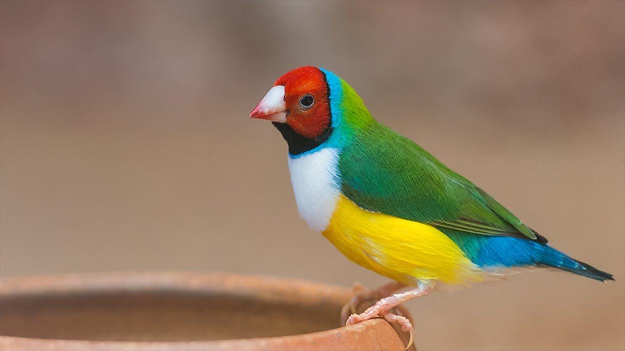 # Finch