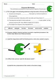 image result for enzyme worksheet - Enzyme Worksheet