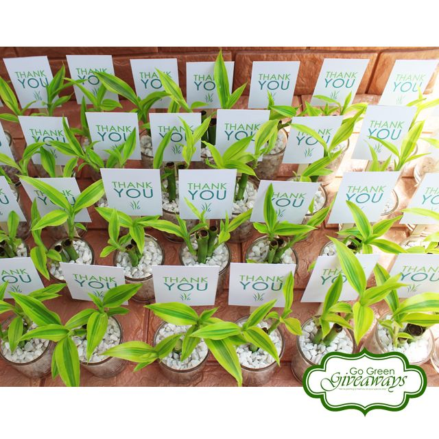 Wedding Favors Ecowraps Succulents With Lace Succulents Philippines Philippine Wedding Manila Weddin Wedding Favors Wedding Gift Favors Diy Wedding Favors