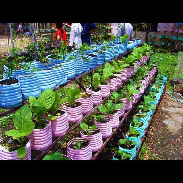 a6a942761d6ae37736b90be2a4106e5a - Bio Intensive Gardening In The Philippines