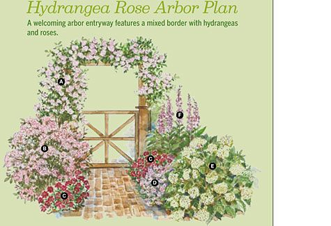 Hydrangea Rose Arbor Planwhiteflowerfarmbhg – Bhg Plan A Garden