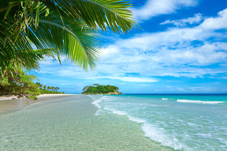 Beach Shore Plants Landscape Tropical Sea Palm Trees Beach Clouds 5k Wallpaper Hdwallpaper Desktop 2020 Manzara