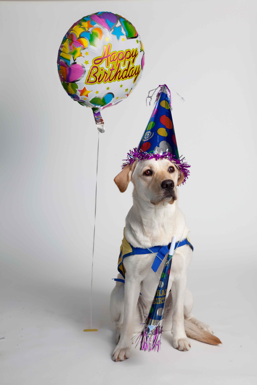Картинка с псом день рождение, сделать открытку для