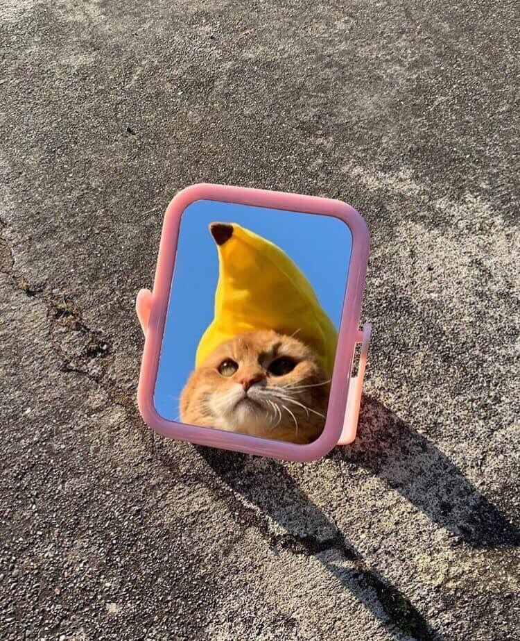 On Cute Animals Kittens Cutest Animals
