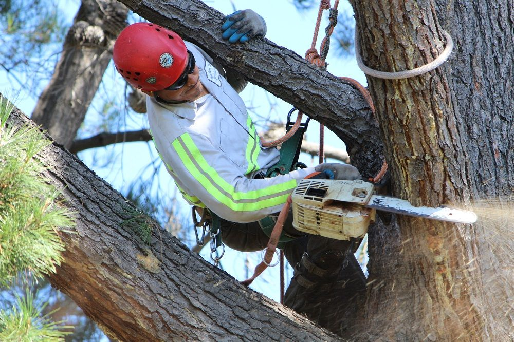Bay Area Tree Specialists 490 S. California Ave Palo Alto, CA 94036 (650) 353-5671 http://bayareatreespecialists.com/  We specialize in comprehensive quality tree services in Palo Alto Bay Area. As an experienced arborist, we offer residential and commercial tree services such as tree trimming, tree pruning, tree removal and more.