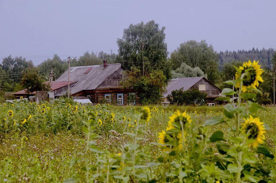 фото деревни летом: 19 тыс изображений найдено в Яндекс ...