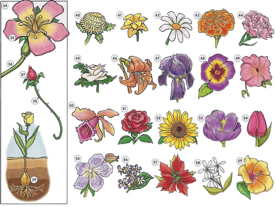 Trees plants and flowers vocabulary PDF Plants