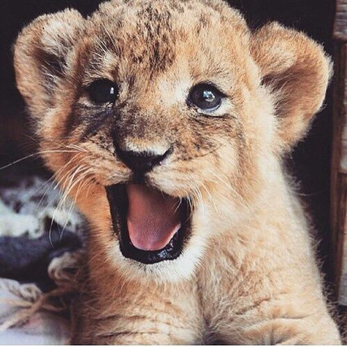 Cute Tumblr Backgrounds For Girls Google Search Babytiere Wilde Tiere Tiere