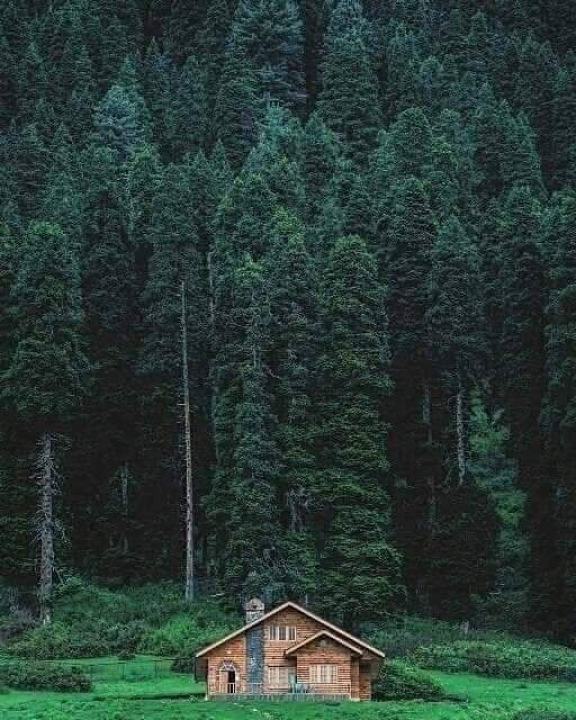 Wilderness ???? #wilderness #photooftheday #tinyhouselife #nature #woods #wanderlust #mothernature #cabinlove #cabins #logcabin #loghouse #outdoorwood