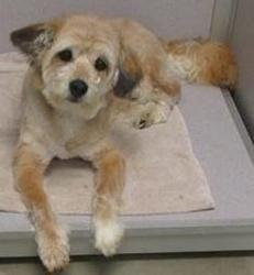 Adopt Wheaton Mix Koral Adopted 7 20 13 On Adoption Terrier