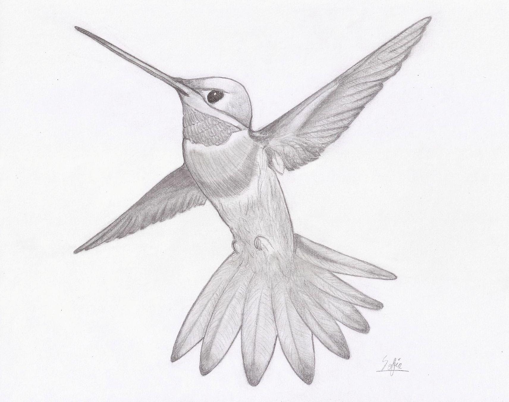 Hummingbird Drawing Dibujo De Colibri Picaflor Colibri Dibujo