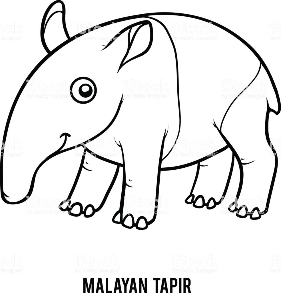 Coloring Book For Children Malayan Tapir Coloring Books Free