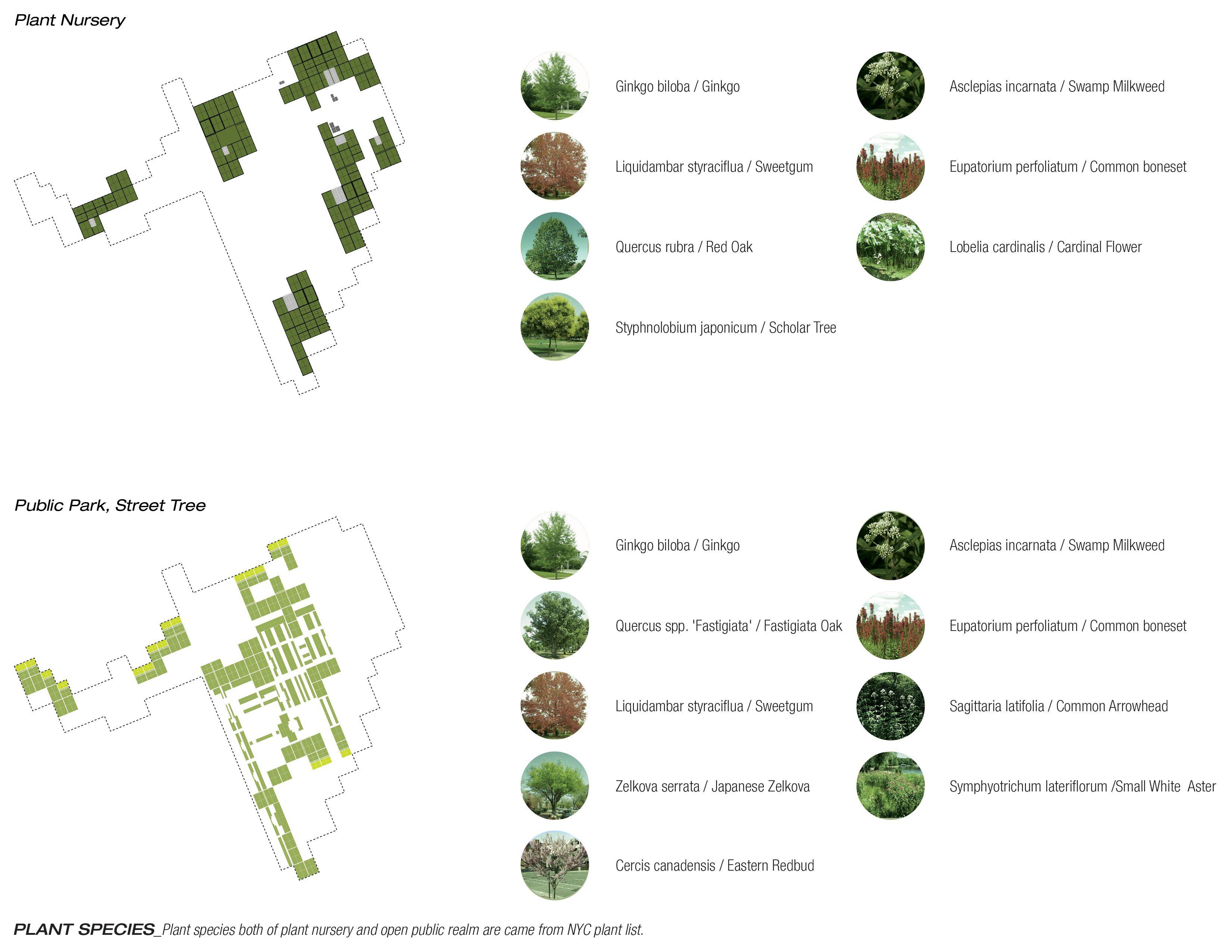 Plant List Google Search Plant Species Plant Nursery