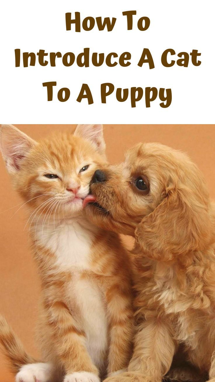 How to Introduce a Dog to a Cat In 5 Easy Steps Cats