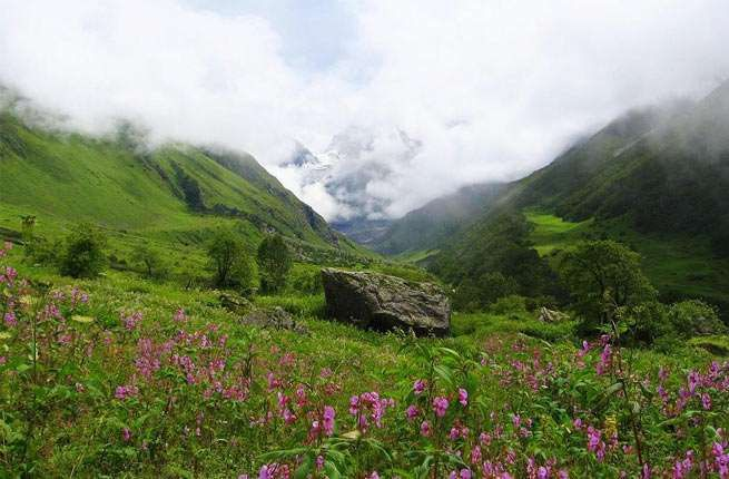 Where: India Designated a national park in 1982 and later named a World Heritage Site, the Valley of ... - Valley of Flowers National Park