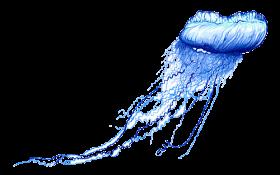 Jellyfish Png Transparent Clip Art Image Art Clip Image Jellyfish Png Transparent Clip Art Art Images Free Clip Art