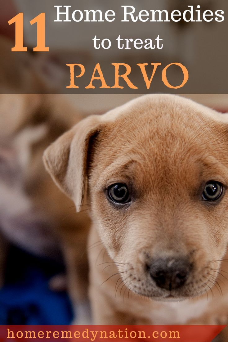 How to Treat Parvo in Dogs and Puppies 11 Home Remedies