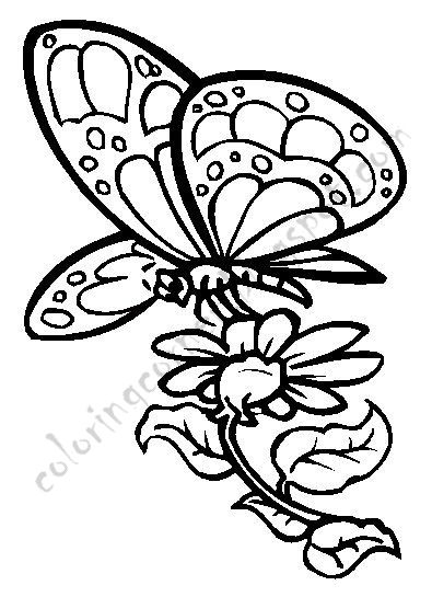 Printable Butterfly Coloring Pages Butterfly Coloring Pages