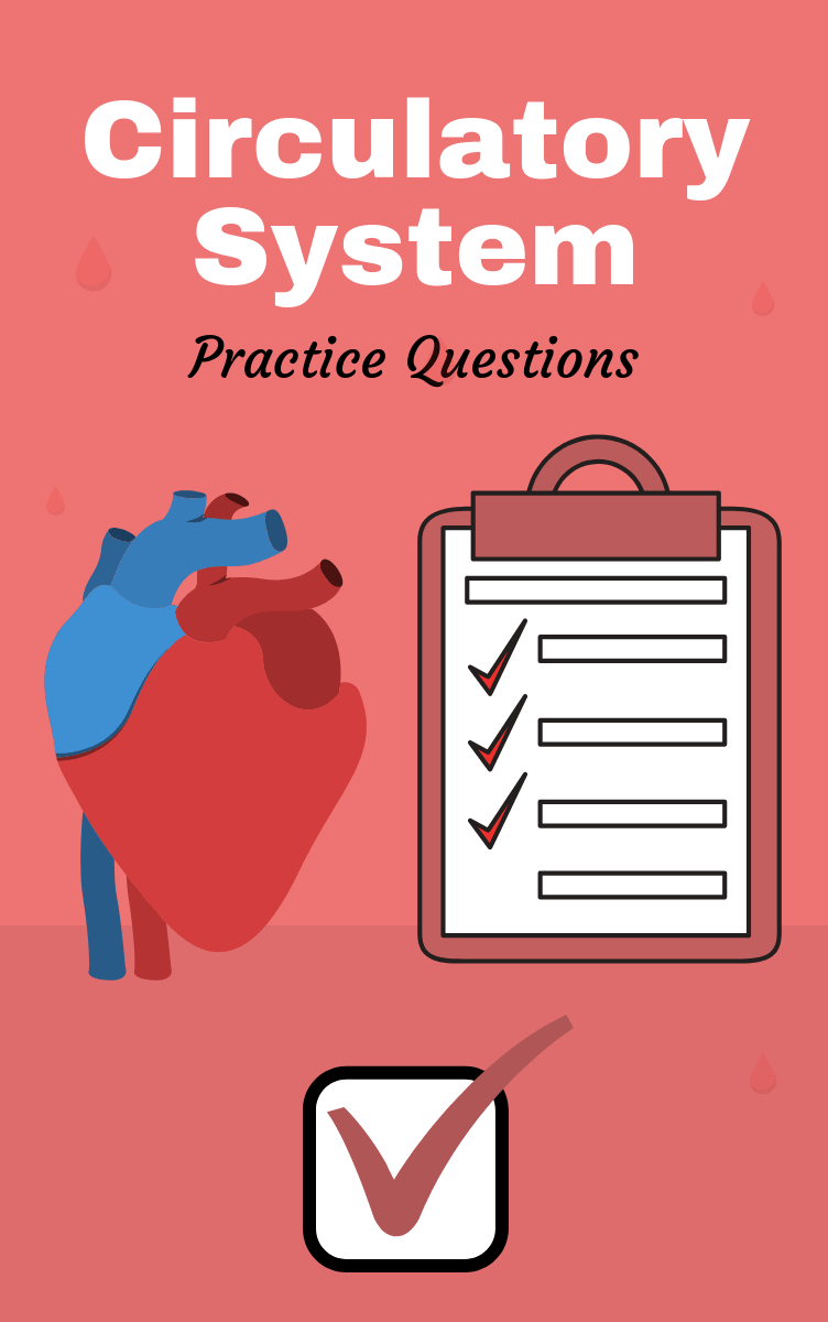 Anatomy And Physiology Of The Circulatory System Practice Questions