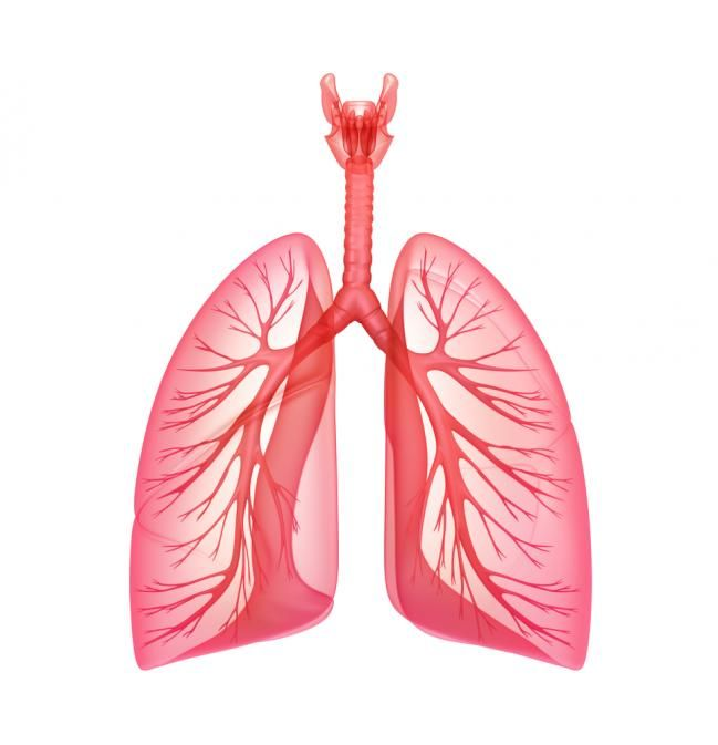 How To Increase Your Lung Capacity 10k Pinterest Lungs