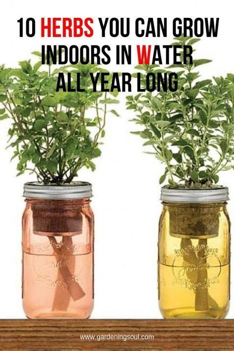 10 Kräuter, die Sie das ganze Jahr über im Wasser wachsen lassen können #howtogrowplants