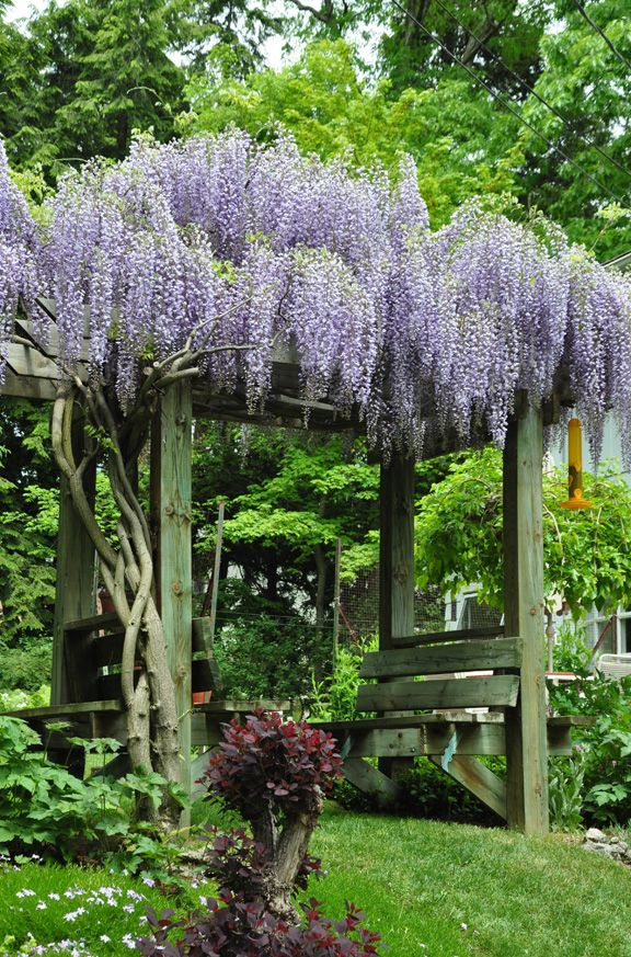 Have A Seat 10 Great Garden Benches Garden Arbor Wisteria
