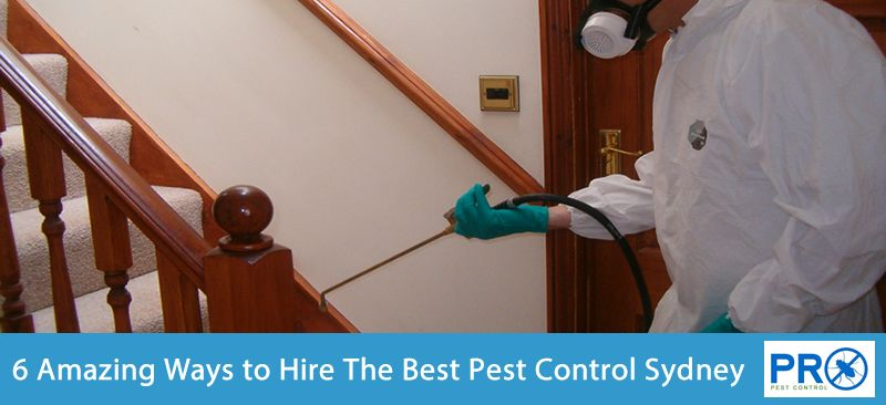 6 amazing ways to finding the best pest control sydney