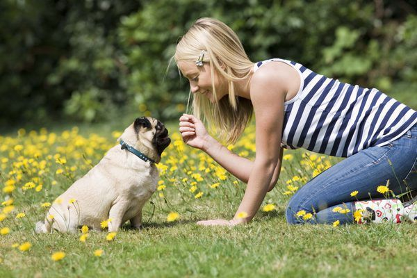 The Most Helpful Pug Advice You Will Ever Read Https