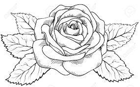 Bildergebnis Für Rose Gezeichnet Bleistift Einfach