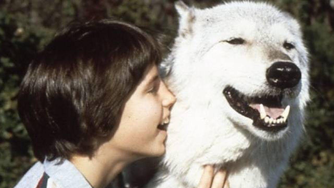 Er lebte allein unter Wölfen  - Die unglaubliche Kindheit von Marcos Pa...