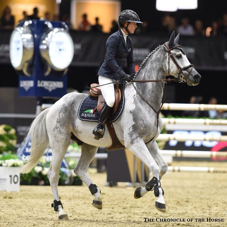 Global Views Horse: Such A Pretty Little Grey Horse In Competition. Equine