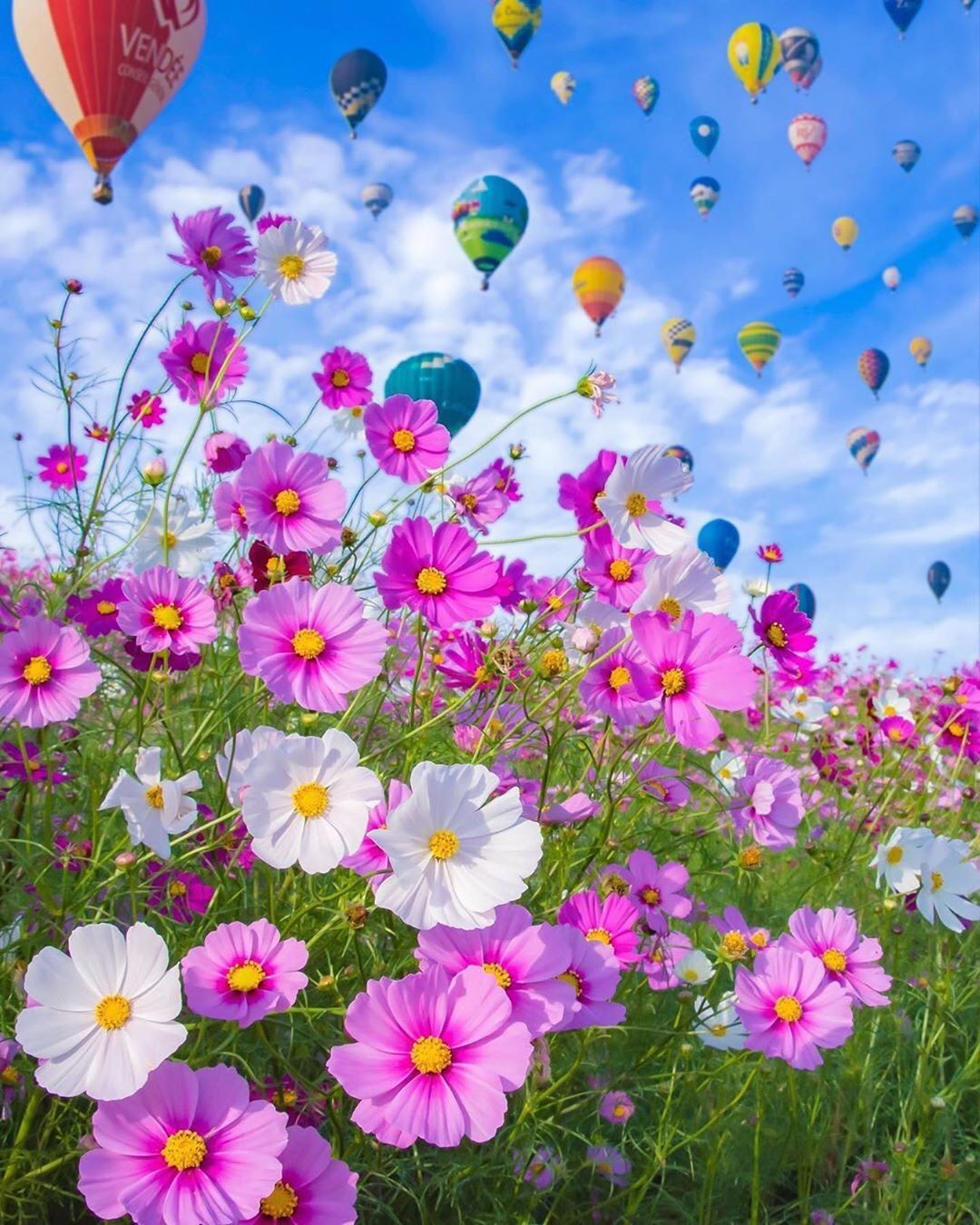 Best Pictures Gallery On Instagram Picture Of The Day Astrailor Jp Congratulations In 2020 Flower Pictures Flowers Beautiful Flowers