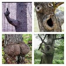 Trees That Look Like People Google Search Tree Dog Pictures That Look
