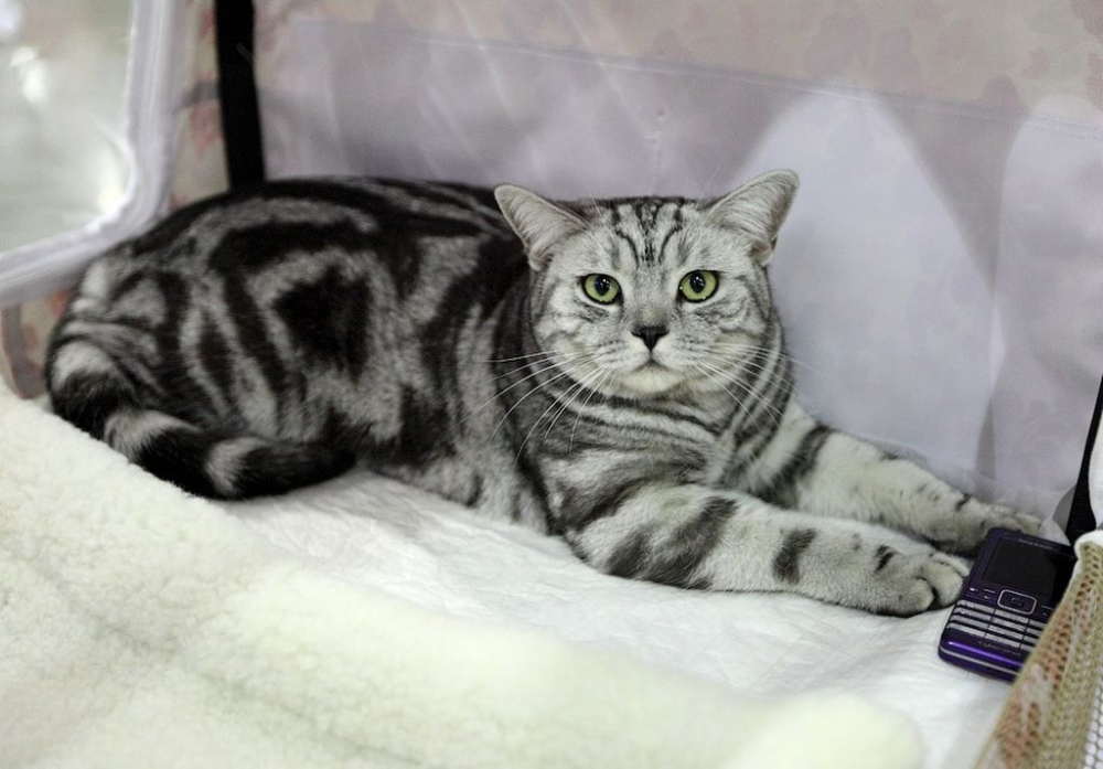 картинки мраморная кошка фото лечебные