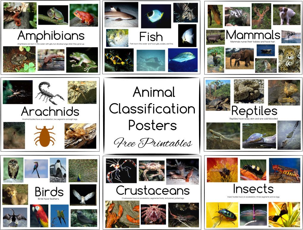 Animal Classification Posters And Games Free Printables