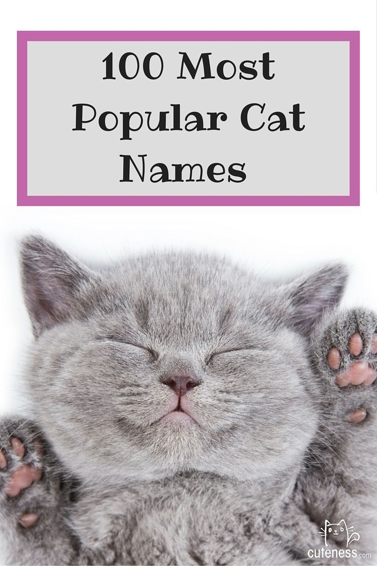 The top 100 cat names are here! Click through to see what