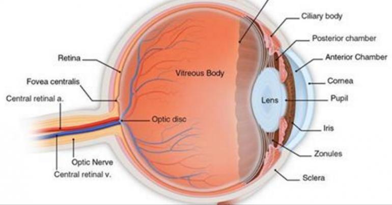 Weakened Eyesight Macular Degeneration And Other Vision Problems