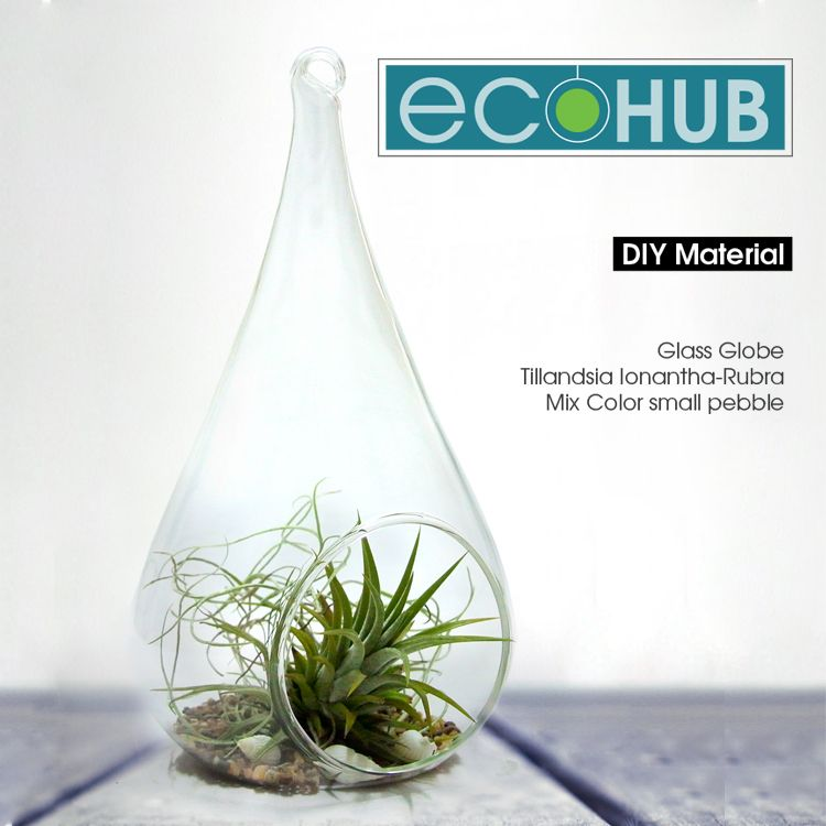 Ecohub Diy Air Plant Kits Water Drop Glass By Aquatic Forever
