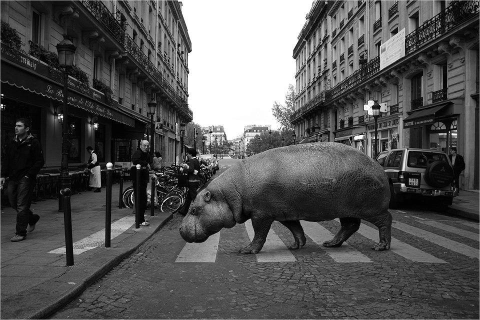 Картинка города и животных