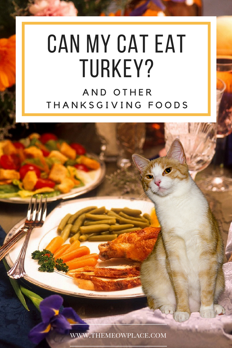 What Thanksgiving Foods Are Safe For My Cat To Eat? Cat