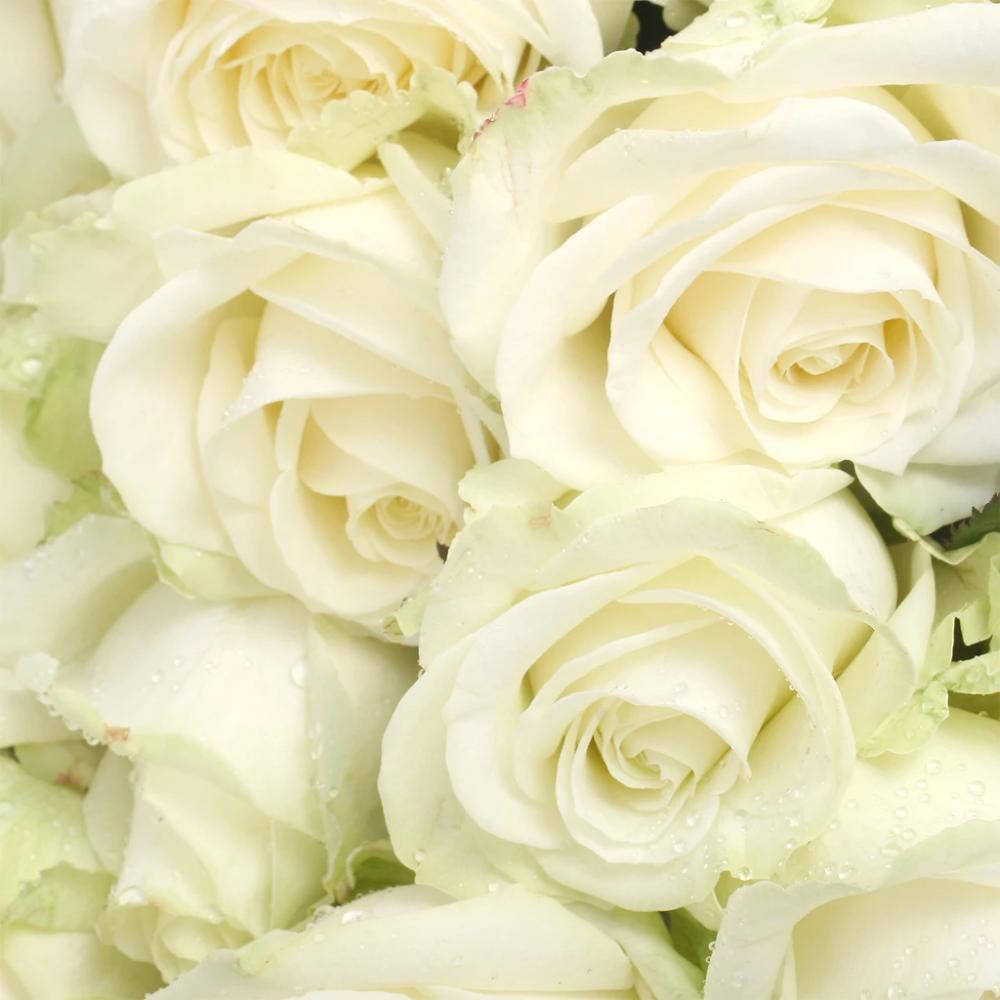 Rose Avalanche 10 Tiges Atelier Rose Pivoine Rose Blanche Fleurs Pivoine