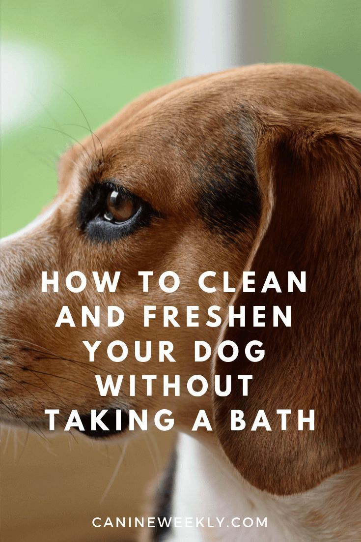 How To Clean Your Dog Between Baths Dogs Dog smells