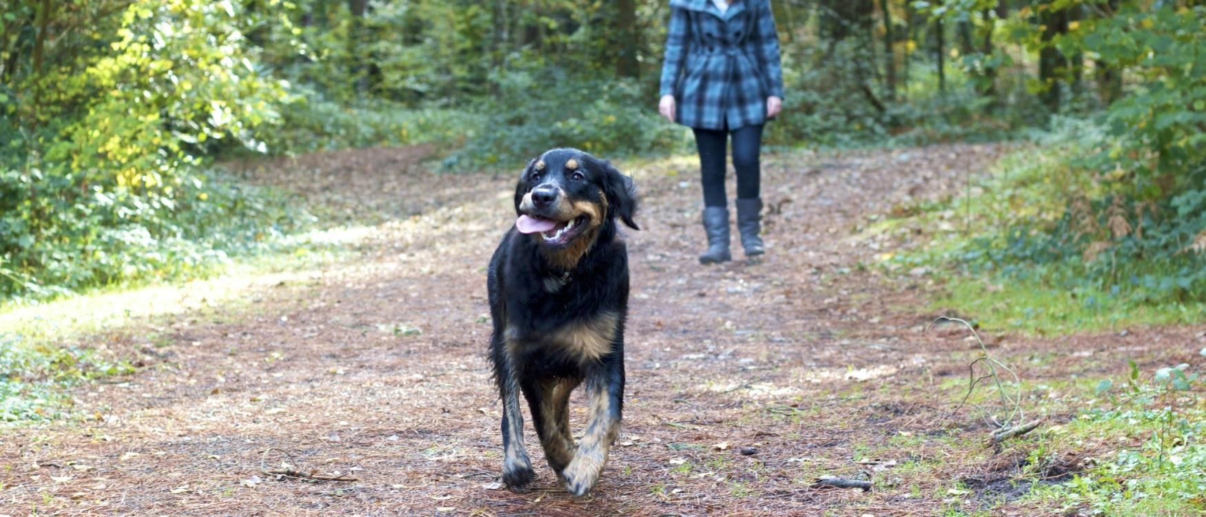 Dog Friendly Attractions In South Devon Many Of Us Have Pets Especially Dogs So When It S Time To Go On Holiday It Can Dog Friends Dog Friendly Accommodation Dog Friendly Holidays