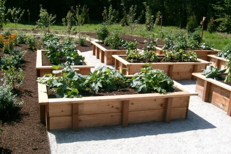 17 Best 1000 images about Vegetable Garden on Pinterest Gardens